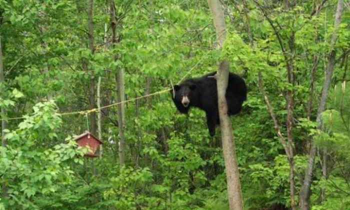 Медведь охотится на птиц (4 фото)