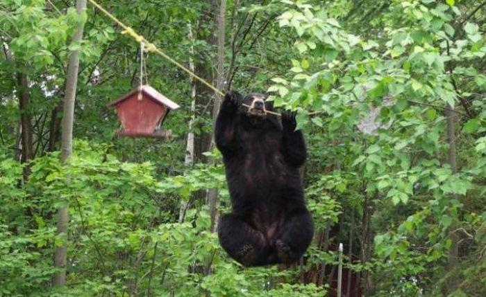 Красивые и смешные медведи (46 фото)