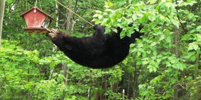http://de.trinixy.ru/pics4/20110401/bear_03.jpg