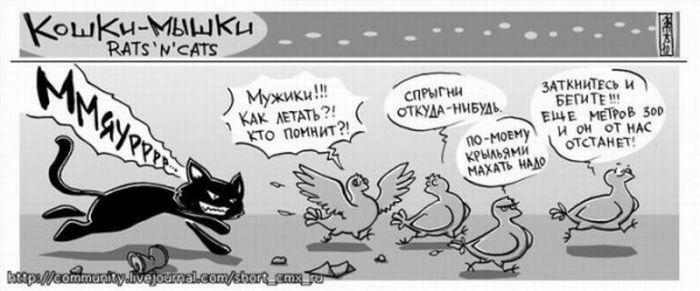 про очень смешные кошек  картинки
