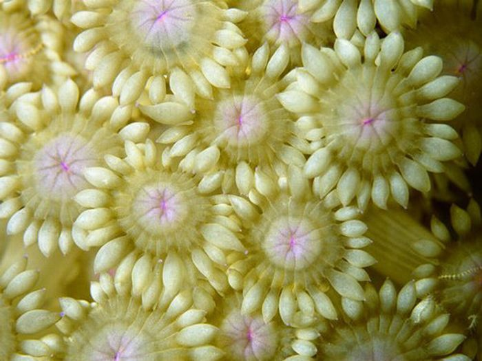 Кораллы (35 фото)
