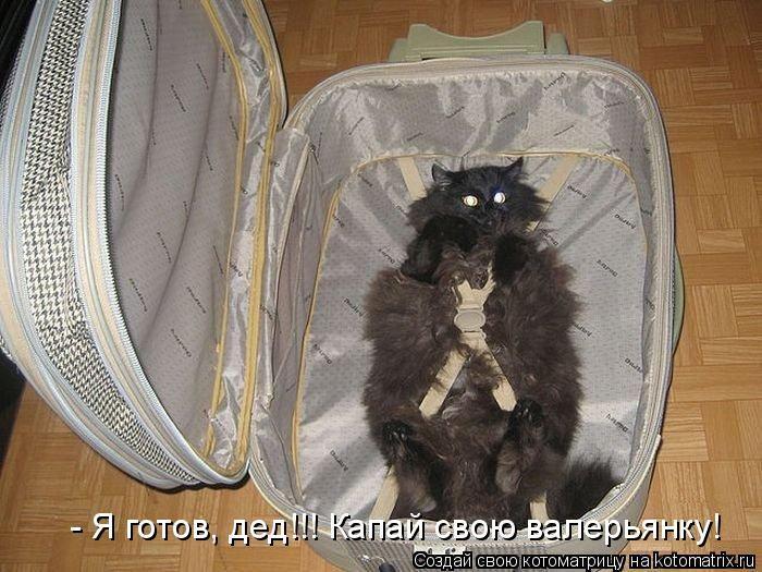 http://de.trinixy.ru/pics4/20110408/kotomatrix_04.jpg