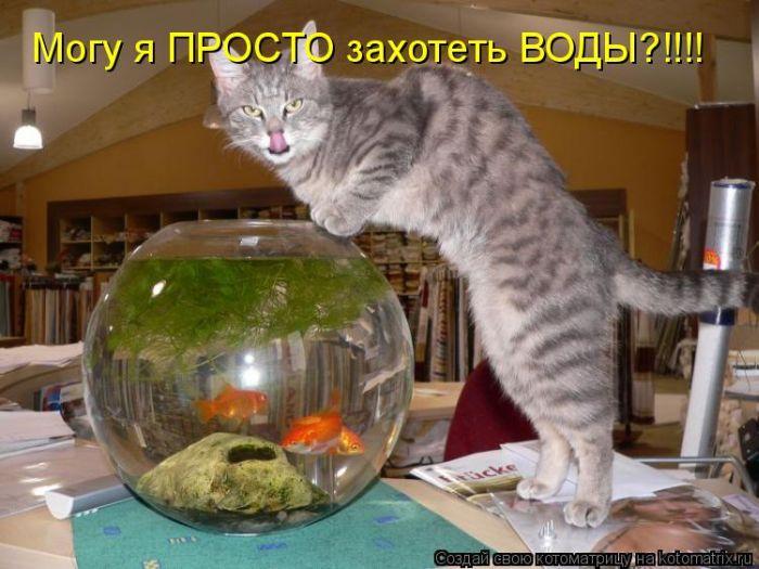 http://trinixy.ru/pics4/20110408/kotomatrix_07.jpg