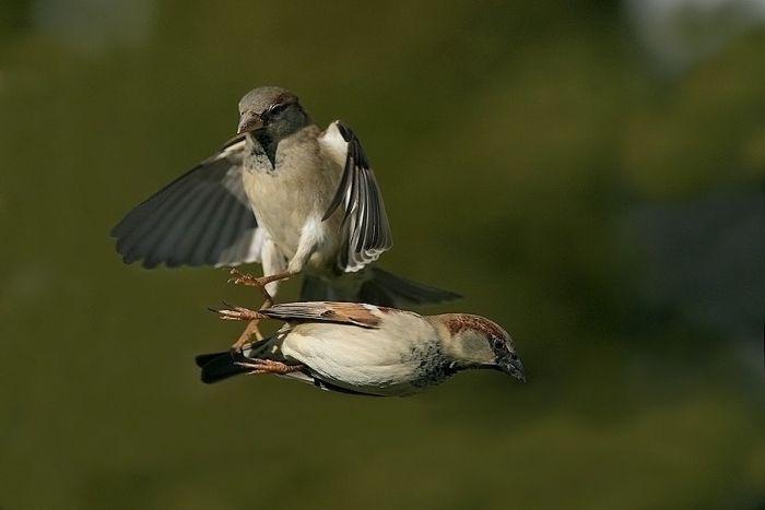 Птицы (100 фото)