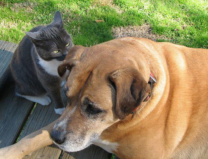 Забавные переговоры котов и собак (16 фото)