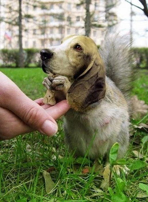 Смешные гибриды разных животных (30 фото)
