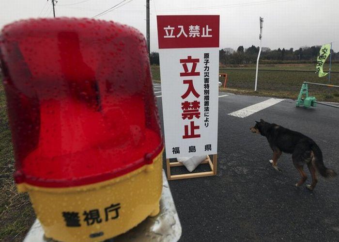 Япония месяц спустя после катастрофы (85 фото)