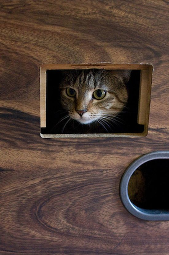 Коты-бильярдисты (15 фото)