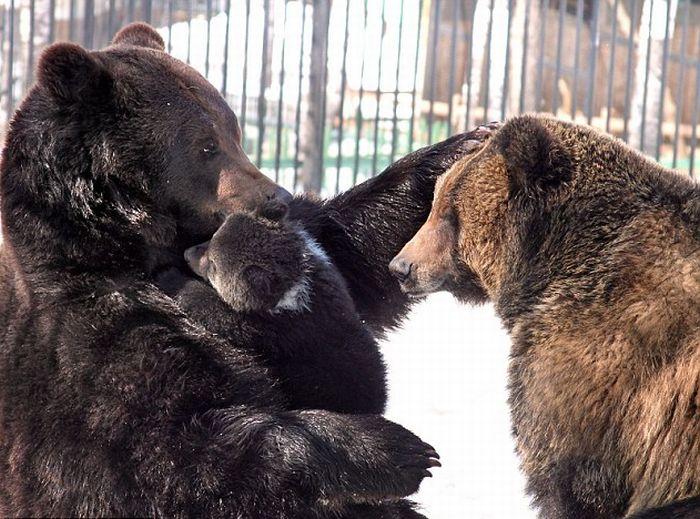 Медведь и медвежонок (4 фото)