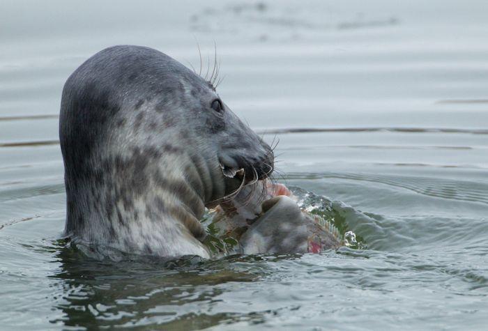 Обычное утро городского тюленя (16 фото)