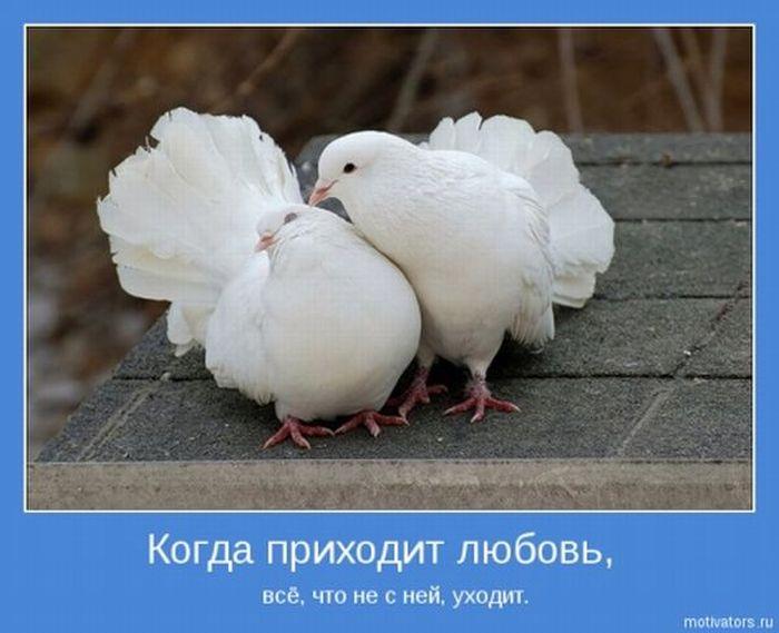Романтические мотиваторы о любви (30 фото)