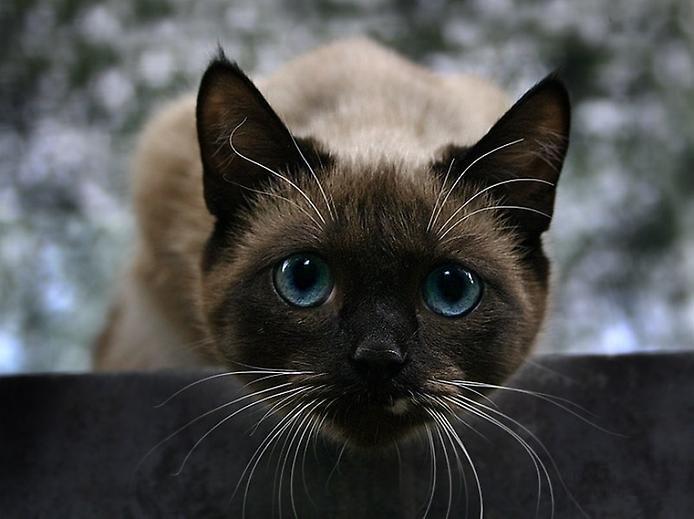 Завораживающие кошачьи глаза (26 Фото)