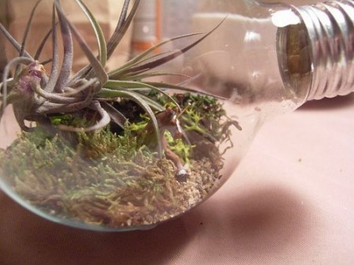 http://de.trinixy.ru/pics4/20110418/exotic_light_bulbs_16.jpg