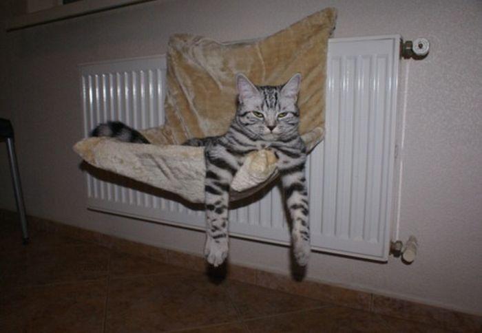 Смешные и нелепые позы котов (47 фото)