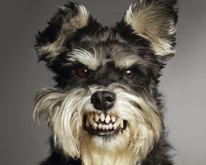 http://trinixy.ru/pics4/20110425/podb/1/angry_animals_24.jpg