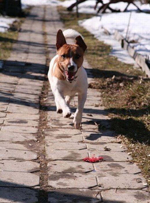 Щенки и взрослые собаки (31 фото)