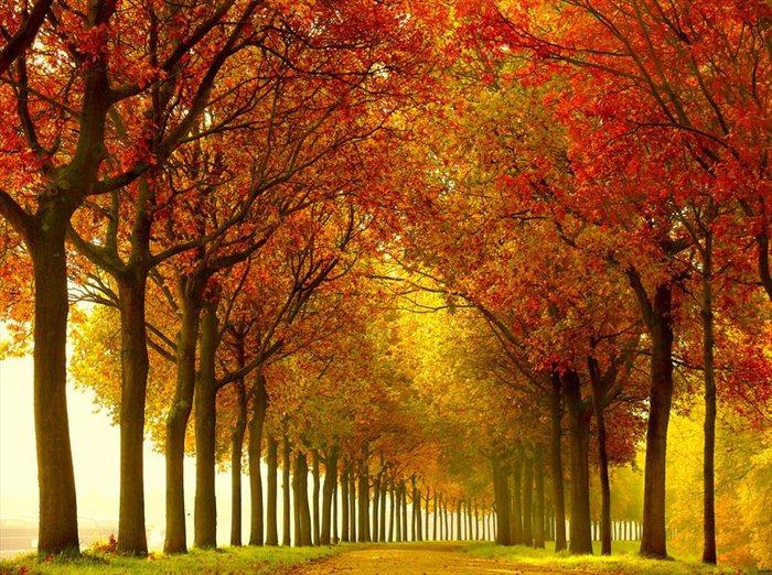 Завораживающая красота природы от Lars van de Goor (23 Фото)