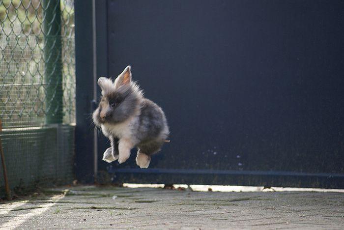 Прыгающие кролики (21 фото)
