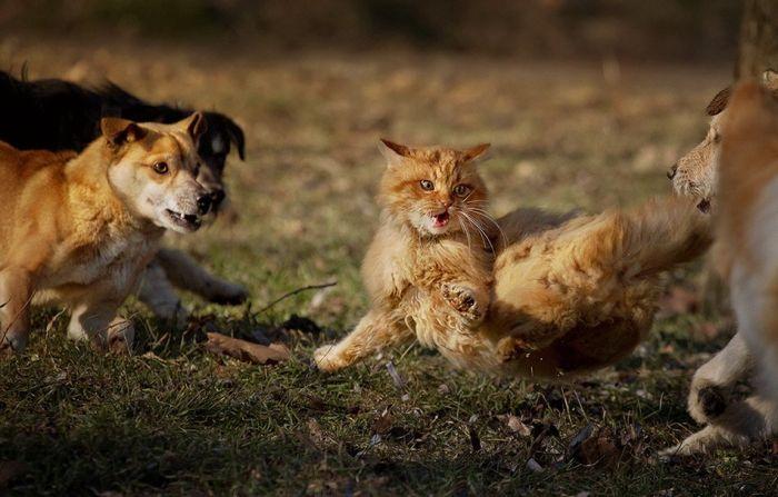 Триллер по-кошачьи (6 фото)