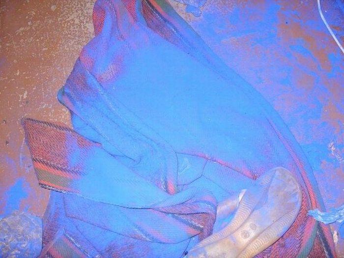 Щенок «голубых кровей» (7 фото)