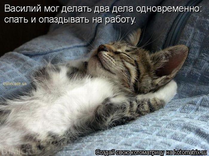 http://trinixy.ru/pics4/20110429/kotomatrix_04.jpg
