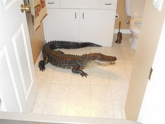 Незванный гость (8 фото)