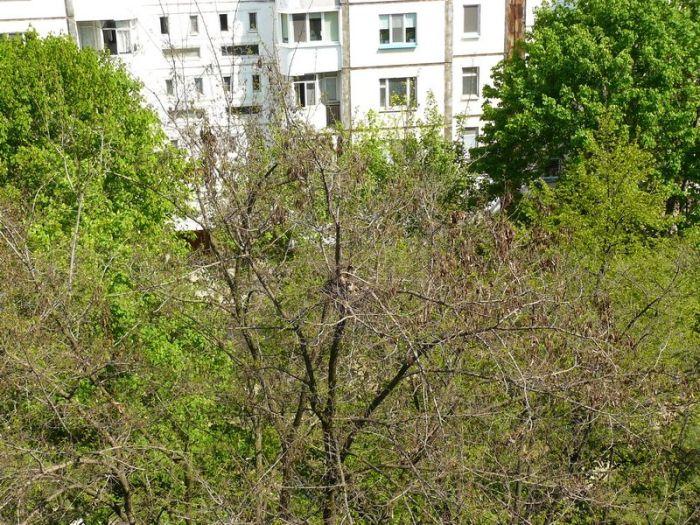 Интересный сосед поселился во дворе (5 фото)