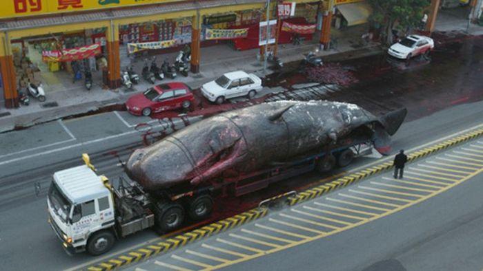 Взрыв кита (9 фото)