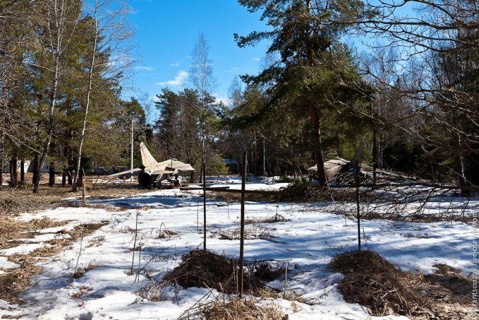 В глухом лесу (34 фото)