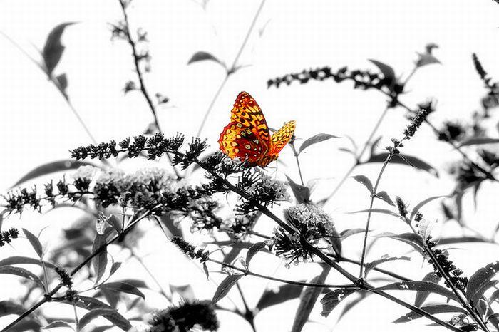 Отбирая цвета (62 фото)