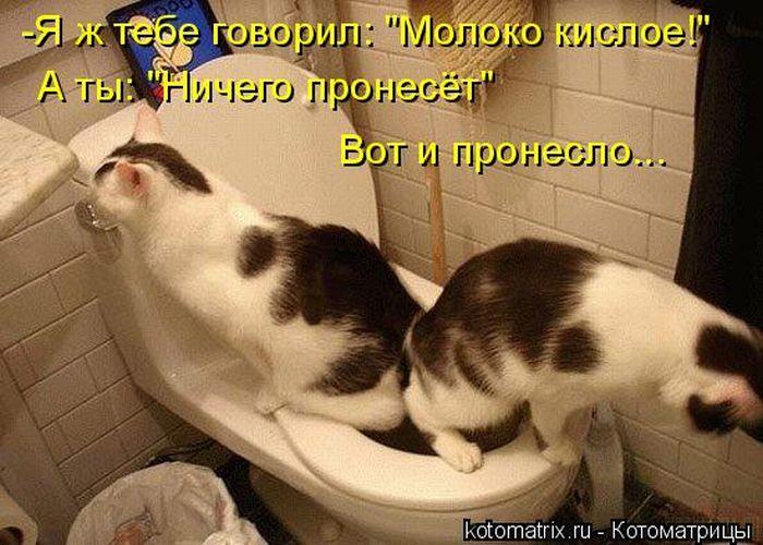 Пятничные котоматрицы (50 фото)