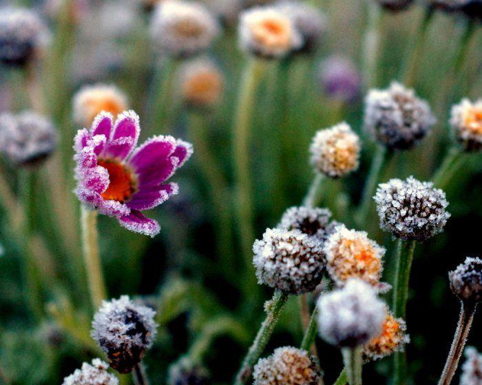 Очень красивые фото. Лед на цветах (19 Фото)