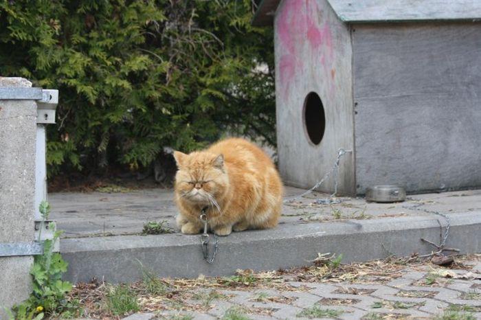 Опасный кот (8 фото)