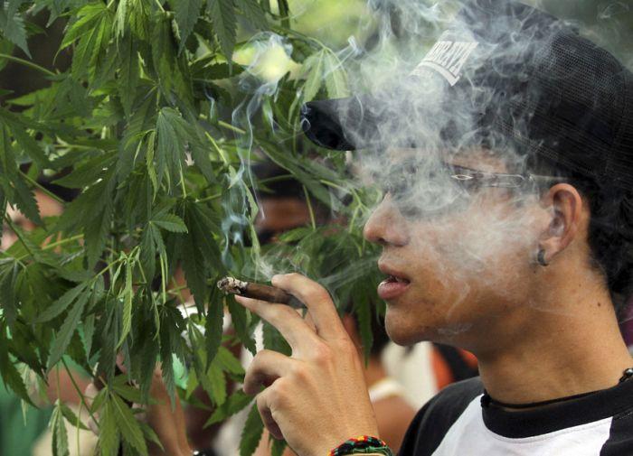 Курить вместо марихуаны марихуана бошки фото