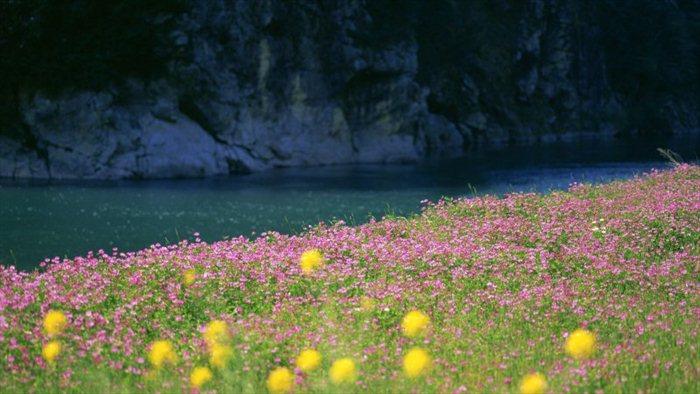 Картинка, Природа, пейзажи, река, вода, трава, цветы, поле, фото