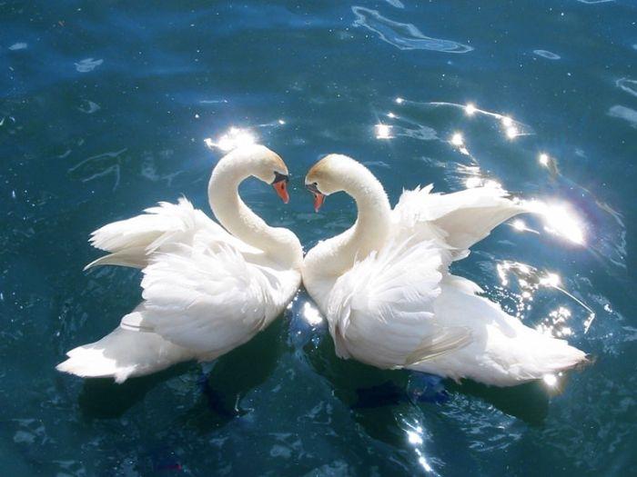 Картинки красивые птицы - 9