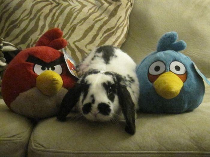Зверюшки и их мягкие игрушки (93 фото)