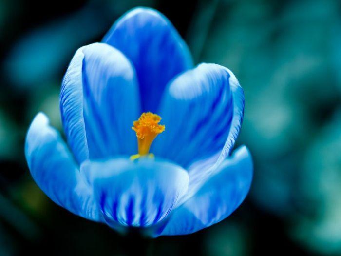 Flowers Nice Blue Flower Wallpaper Wallpapers Gallery.