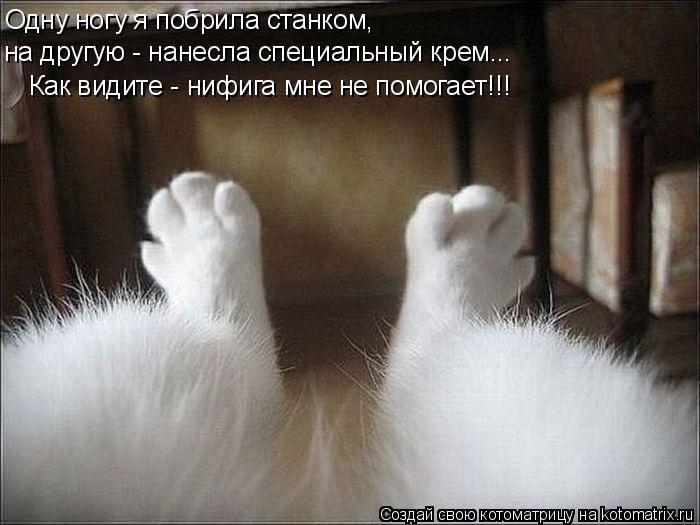 http://cdn.trinixy.ru/pics4/20110513/kotomatrix_50.jpg
