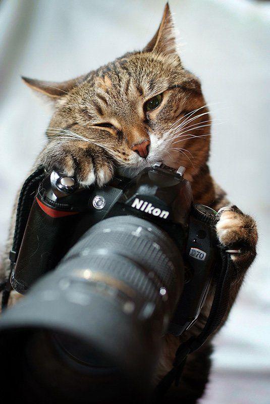 Любителям котов посвящается (27 Фото)