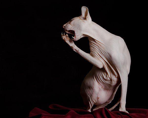 Когда Фредди Крюгер болеет, кошка Фёкла с радостью заменяет его на...
