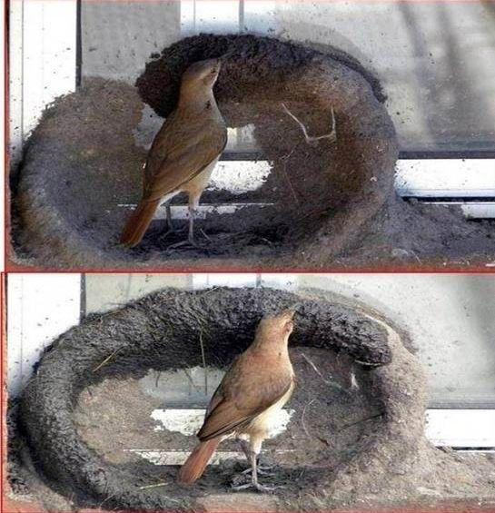 (3.774 MB).  Гнездо в пепельнице (2 фото).  Похожие новости из архива.