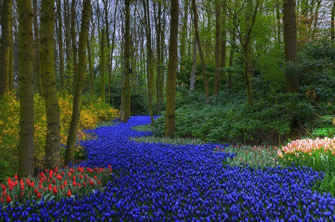 Самые красивые сады в мире (15 Фото)