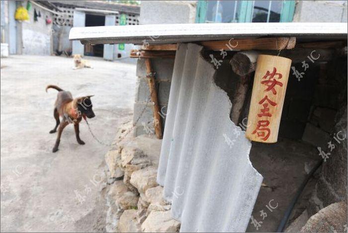 Боевые петухи Китая (20 фото)
