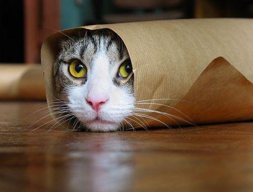 Прикольные буррито из животных (24 Фото)