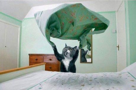 Смешные коты-домохозяйки (12 Фото)