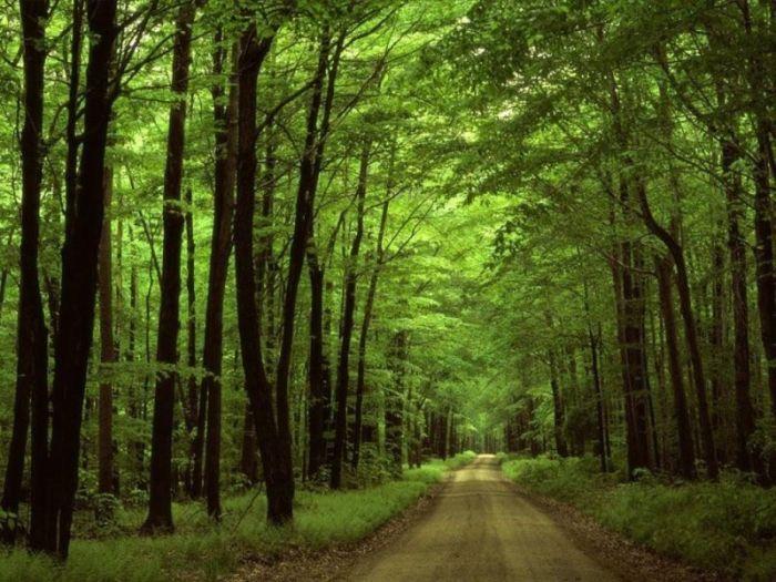 Природа красивые фотографии