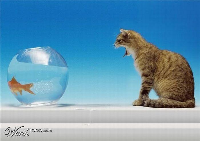 Забавные фото на тему: «Невозможное возможно» (33 фото)