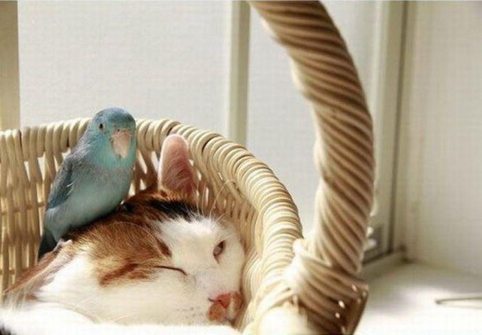 Друзья или враги? (4 фото)