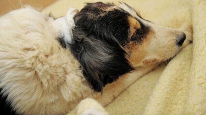 Спасенная собака (3 фото)